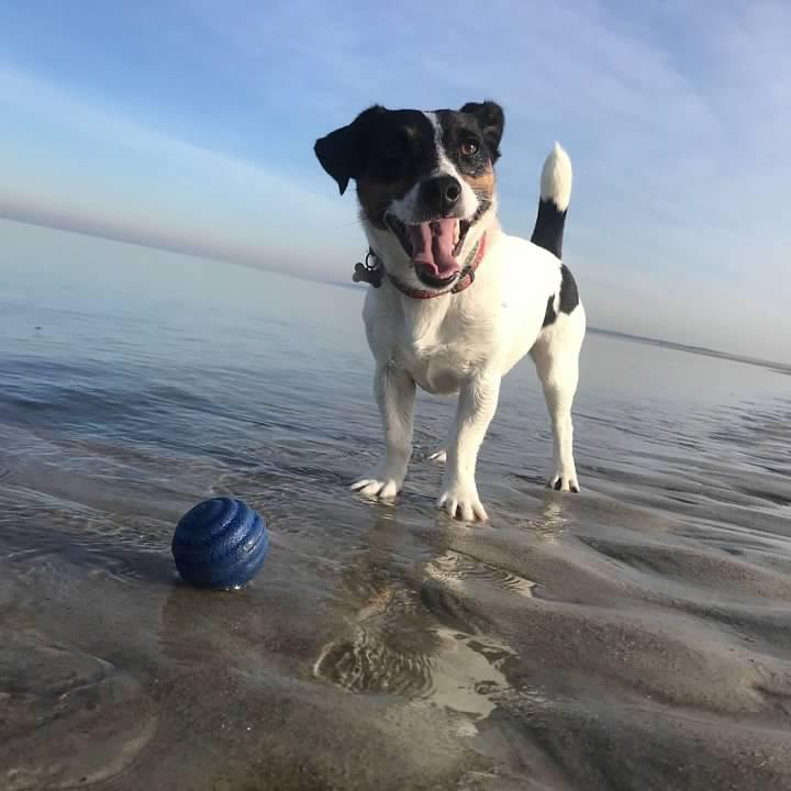 A dog enjoying a day in the sun