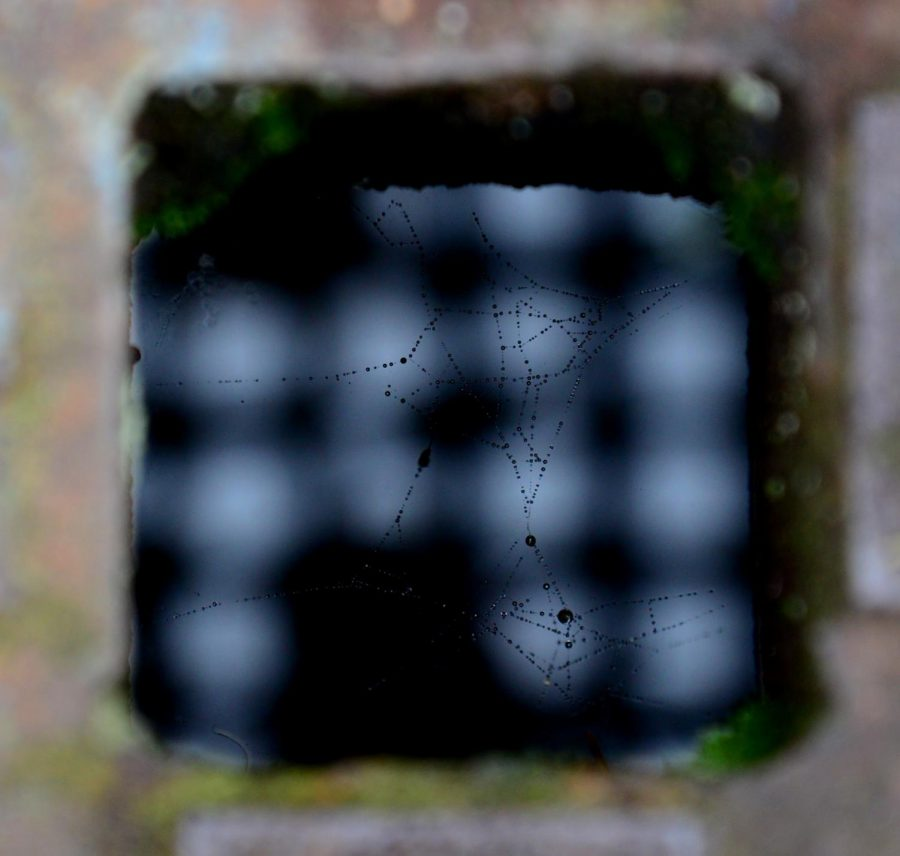 A cobweb above the sewer